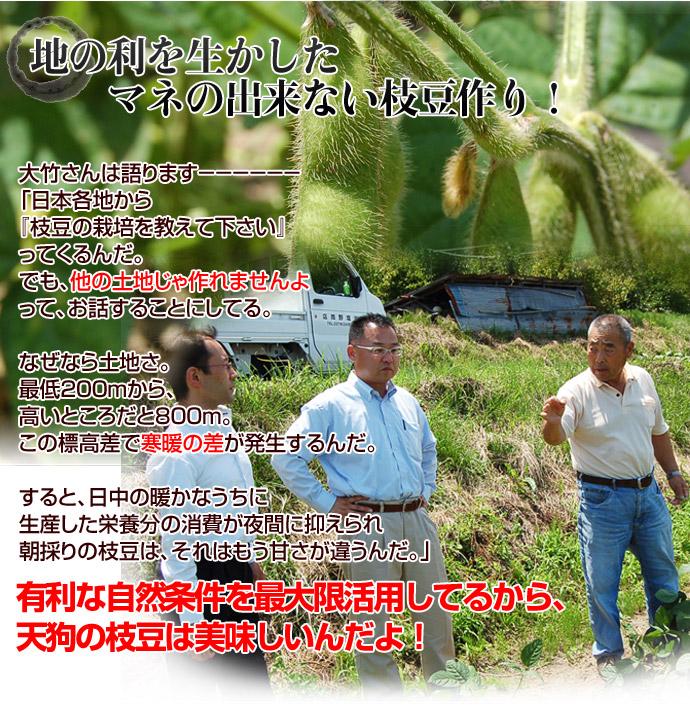 群馬県産 天狗印枝豆 味緑